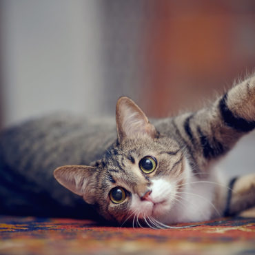 ペットが自由に移動できるどこでもドア